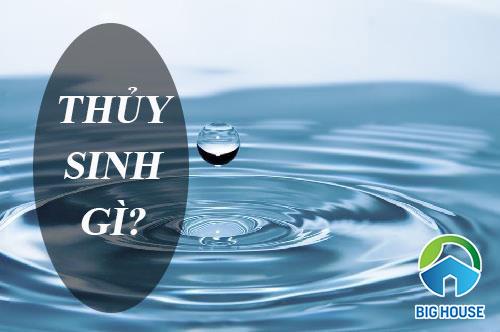 Thủy sinh gì? Ứng dụng phong thủy mệnh Thủy trong cuộc sống